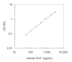 A typical standard curve obtained using the Human SCF ELISA Kit